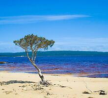 Lone tree at Broke Inlet by pennyswork