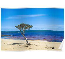 Lone tree at Broke Inlet Poster