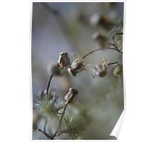Gentle dance (from wild flowers collection)  Poster