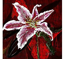 Asian Lilly Photographic Print