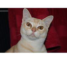 Louie Photographic Print
