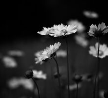 Flowers in Black and White by Francisco Gorrez