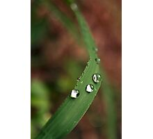 water drops 2 Photographic Print