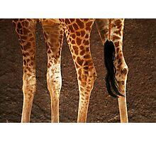 Giraffe Legs Photographic Print