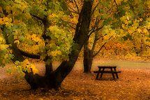 Autumn in Mt Victoria by sonjas