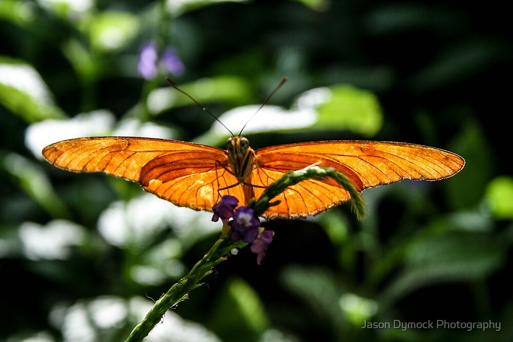 sunning his wings by Jason Dymock Photography
