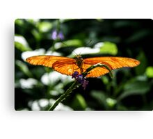sunning his wings Canvas Print