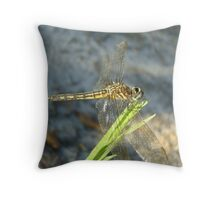Blue Dasher on Native Grass Throw Pillow