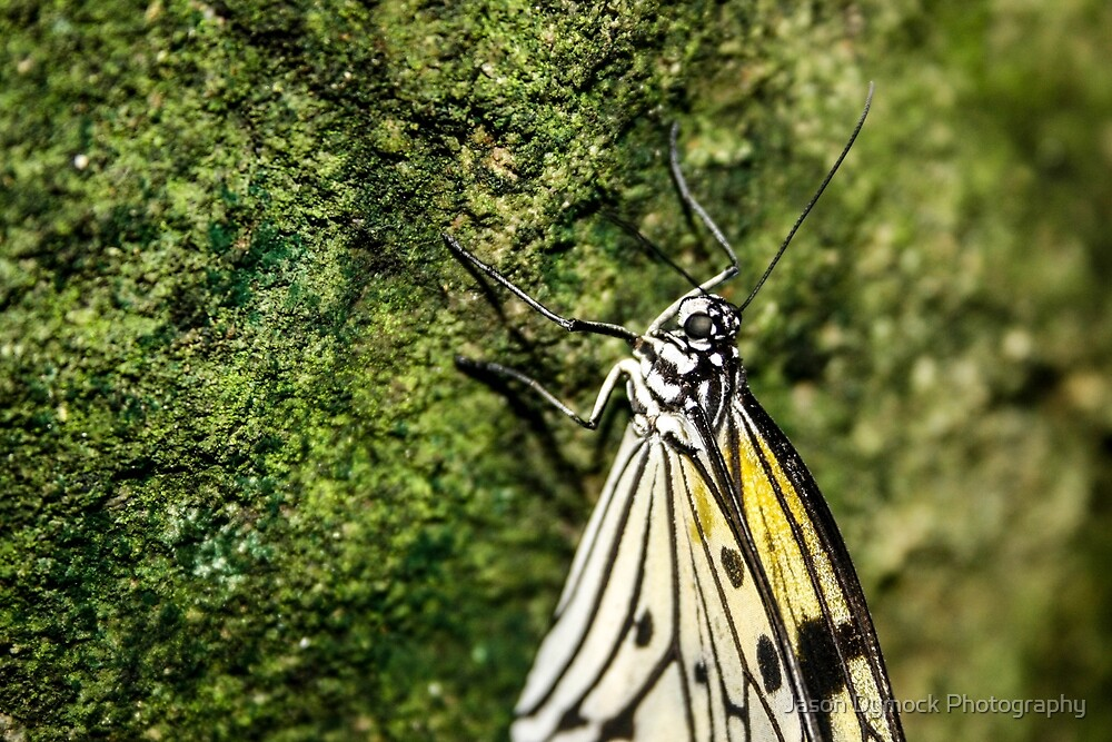 butterfly on the moss by Jason Dymock Photography