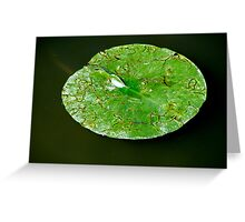 Lily Pad. Greeting Card