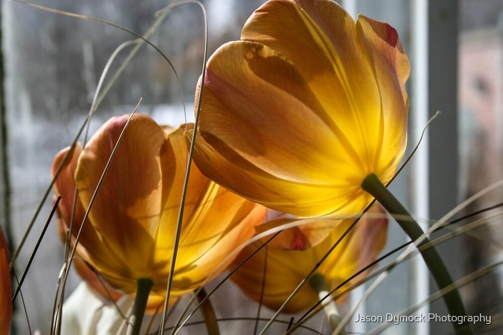 what light through yonder window breaks by Jason Dymock Photography