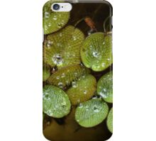 Water Spangles (Salvinia) After the Rain iPhone Case/Skin