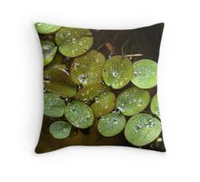 Water Spangles (Salvinia) After the Rain Throw Pillow