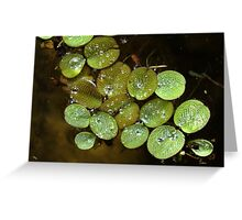 Water Spangles (Salvinia) After the Rain Greeting Card