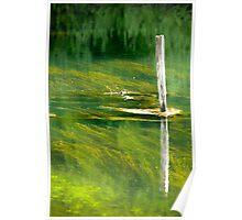 Reflections of the riverside in Rakov Skocjan gorge, Slovenia Poster