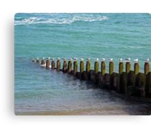 """Seventeen Seagulls . . Standing on the Groyne"" Canvas Print"