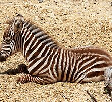 Baby stripes by MarthaBurns
