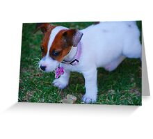 Baby Jack Russell Greeting Card