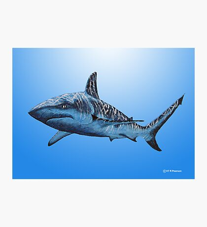 Bull Shark Photographic Print