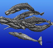 Sperm Whale Pod by Dolfinguy