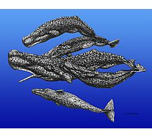 Sperm Whale Pod Photographic Print