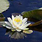 The Waterlily Named Friendship by Teresa Zieba