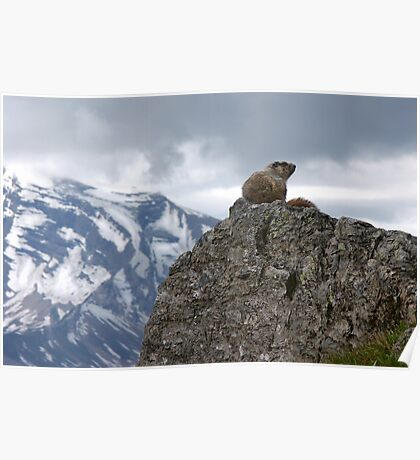 Marmot on Mountain Poster