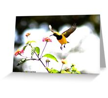 Honey eater in flight Greeting Card