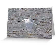 Skimming Great Egret Greeting Card