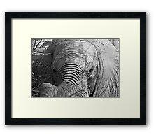 Elephant Stare Framed Print