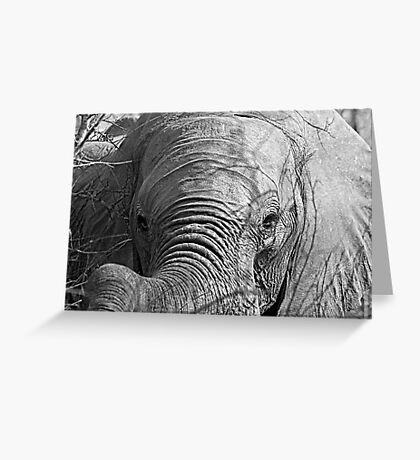 Elephant Stare Greeting Card