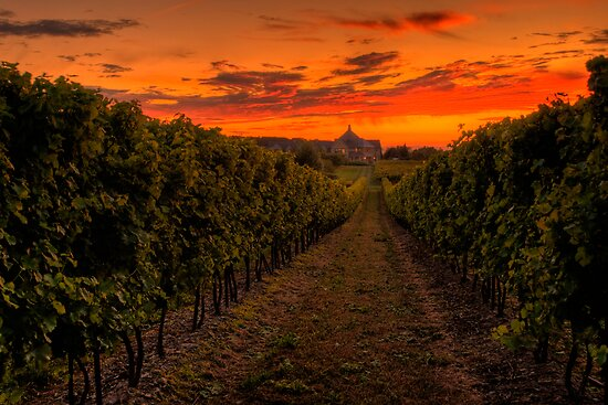 Peller Estates Winery by (Tallow) Dave  Van de Laar