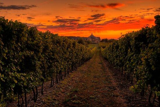Peller Estates Winery by (Tallow) Dave  Van de Laar