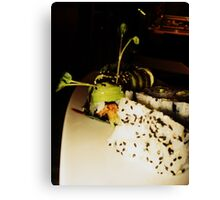 Vegetarian Caterpillar Canvas Print