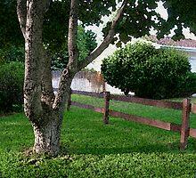 The neighbors by LisasPics