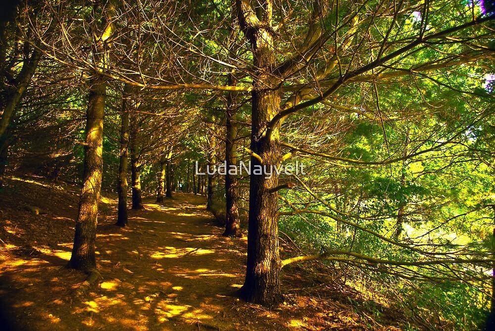 Follow the  trail  by LudaNayvelt