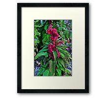 Landscape Border Framed Print