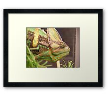 Panther.  Framed Print