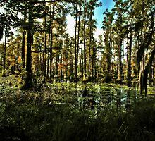 Swamp Shadows by photosan