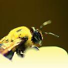 Fall ~ Busy Bee.. by Larry Llewellyn