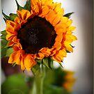 Sunflower by Kimberly Johnson