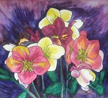 Hellebores Galore by Alexandra Felgate