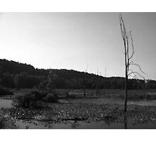 Standing Water Photographic Print