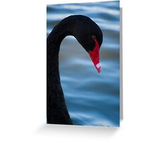 Swan 3 Greeting Card