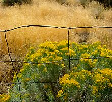 fence frame by Bruce  Dickson