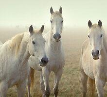 Three Whites by Hans Kawitzki