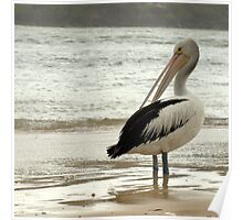 Pelican on Show Poster