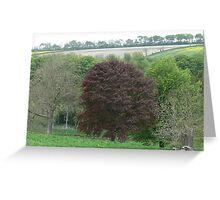 trees boynton bridlington Greeting Card