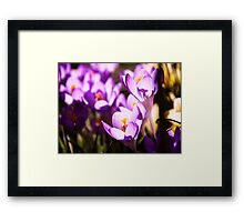 Stained glass petals Framed Print