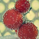 Retro Fruit by Sarah Moore